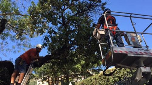 Ufficio Verde Pubblico Salerno : Salerno: manutenzione verde pubblico nuovo bando dal comune