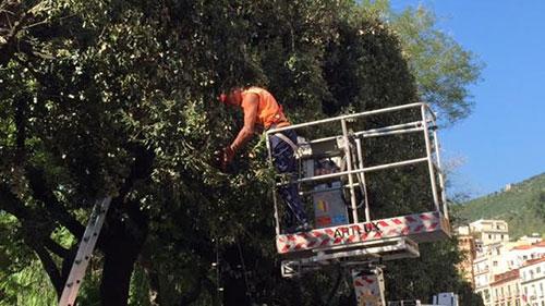 montaggio_luci_artista_4_alberi_potatura