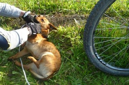 cane impiccato