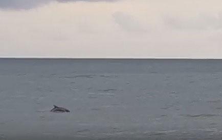 delfini-lungomare-salerno