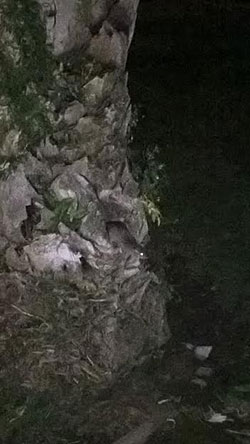 parco-del-mercatello-topi-3