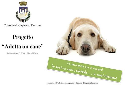 adotta_un_cane
