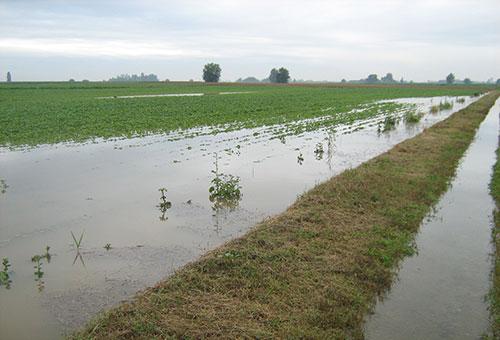 agricoltura_maltempo_danni