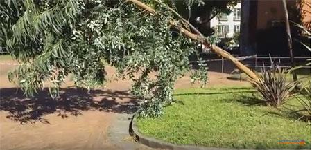 albero-caduto-in-villa-comunale