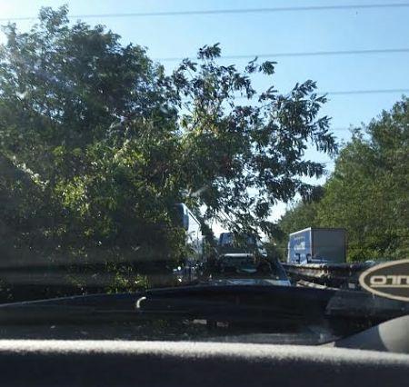 albero-su-carreggiata-1