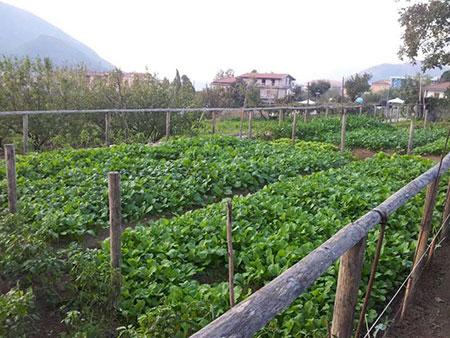 orti-sociali-agricoltura