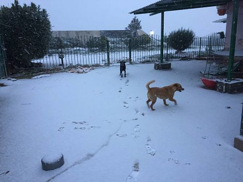 cani-nella-neve