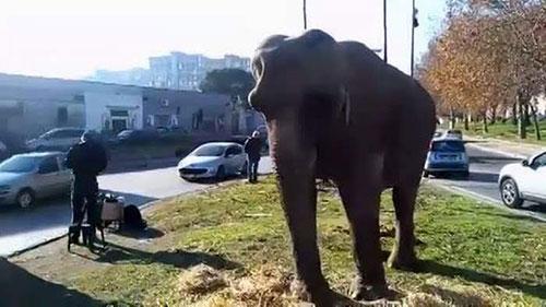 elefante-scampia