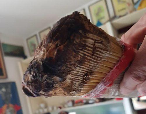 Pasta infestata da insetti, scatta l'allarme: