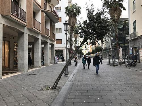 Ufficio Verde Pubblico Salerno : Salerno: cadono alberi per il vento sindaco chiude i parchi