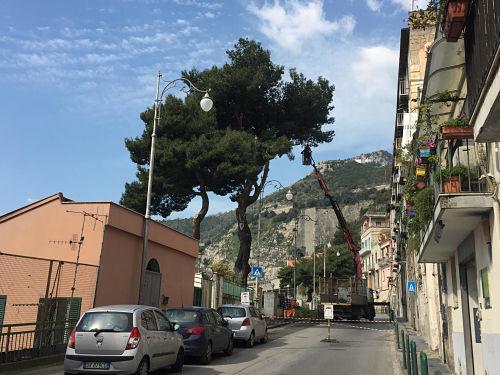 Ufficio Verde Pubblico Salerno : Salerno: abbattuti alberi in via indipendenza la protesta corre sul