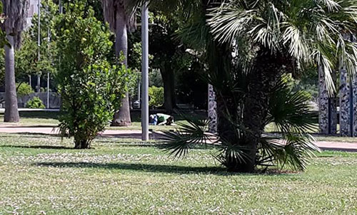 Ufficio Verde Pubblico Salerno : Il parco del mercatello deve tornare ad appartenere alla gente la