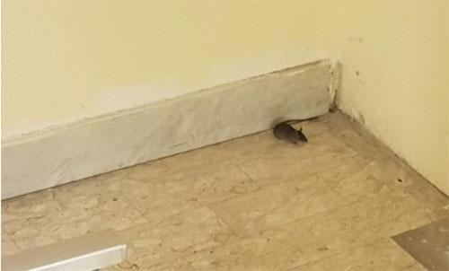 Trovati escrementi di topi nelle aule: chiusa scuola a Baronissi - Salernonotizie.it
