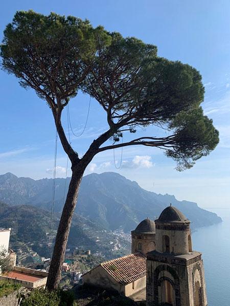 Ravello, il pino più famoso della Costiera Amalfitana si rifà il look [FOTO]