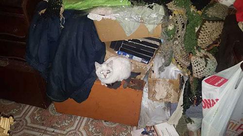 escrementi di gatto nel condominio