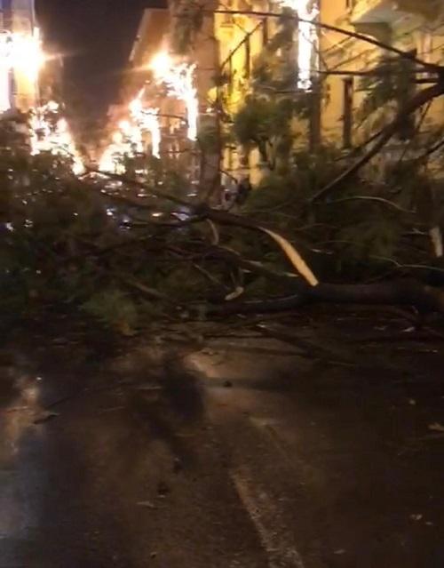 Salerno, albero caduto per maltempo: mamma e figlia in ospedale
